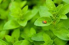 ladybug-226