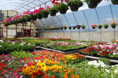 Garden Centers Paynes Nurseries