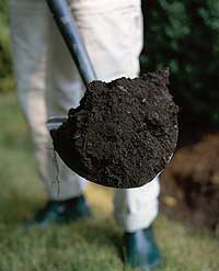 shovel-with-dirt