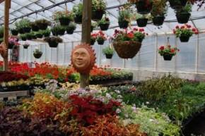 greenhouse.5.smileysun