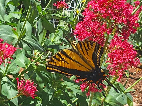 Butterflywinnerx