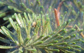 spidermite3
