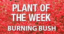 PAYNES_burningbush
