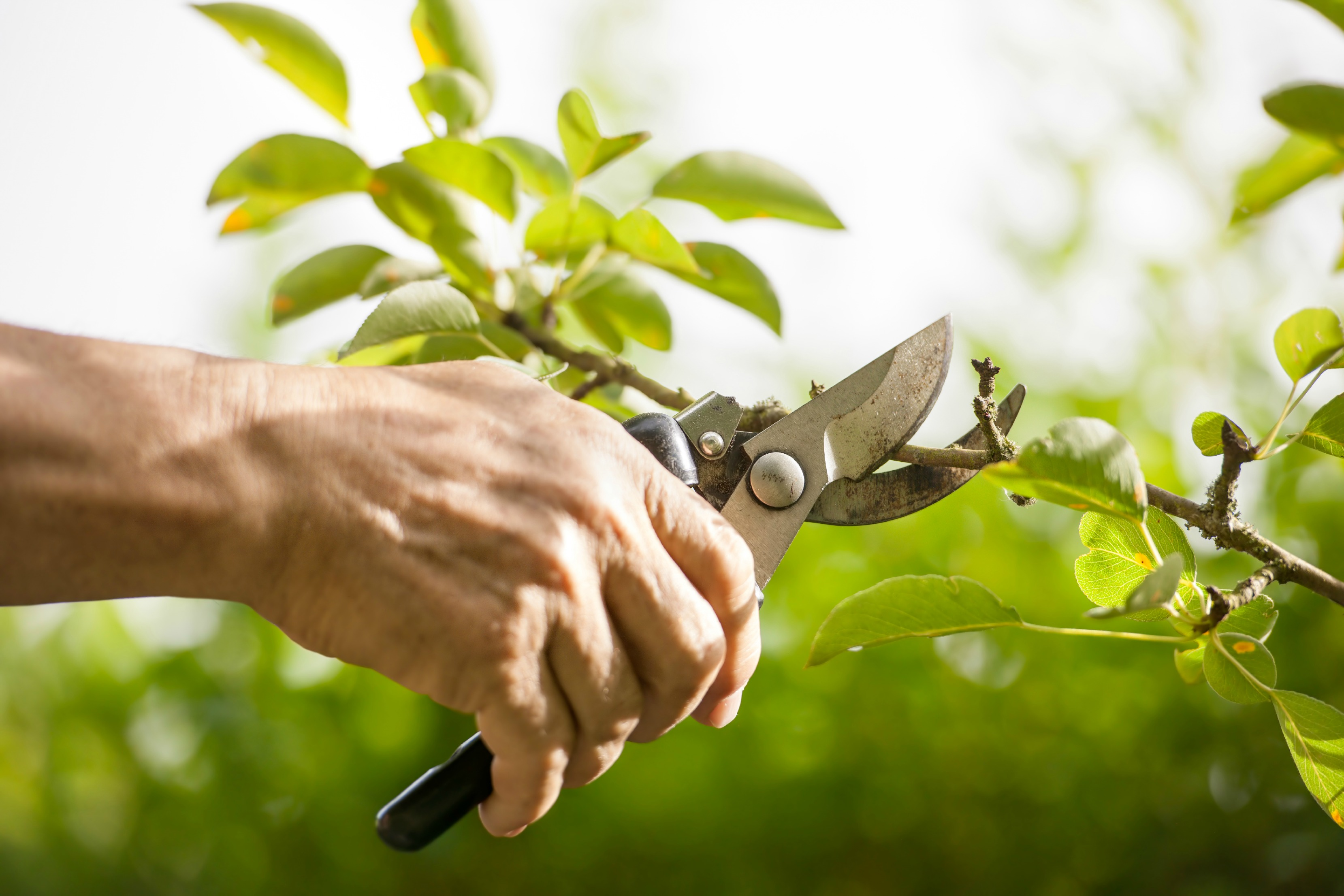 tree-pruning-guide