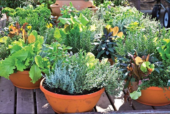 flora-jar-plant-potted-plant-pottery-vase-human-people-person-herbs