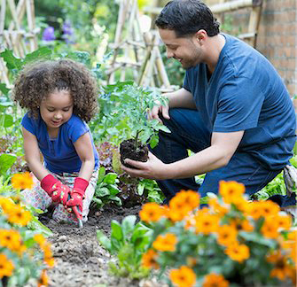 619-07236695 © Masterfile Royalty-Free Model Release: Yes Property Release: No Hispanic father and daughter gardening together