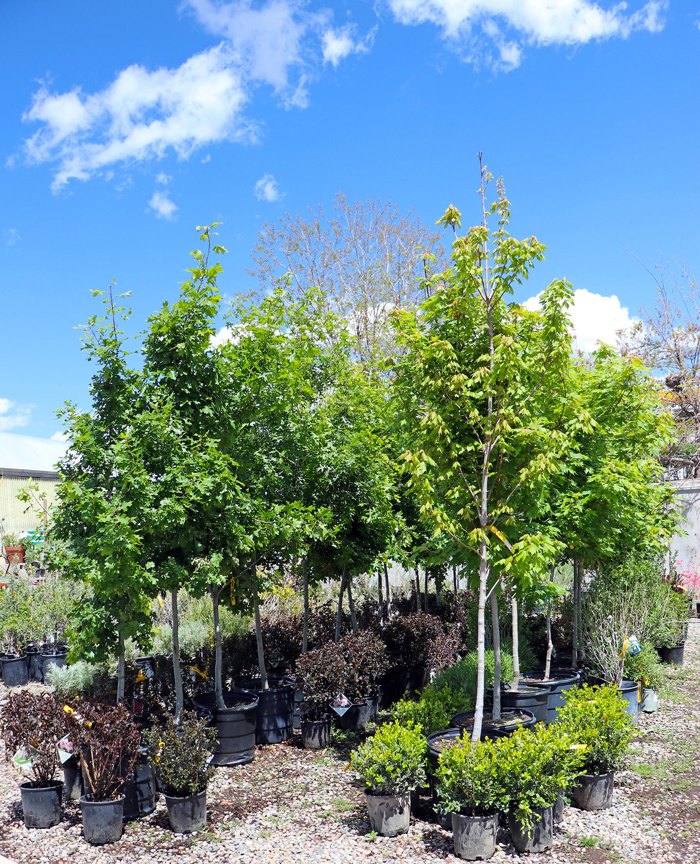 trees2019fx