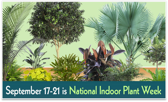 national-indoor-plant-week-2018-dates