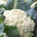 cauliflower-1465732_960_720