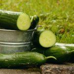 cucumbers-1588945_960_720