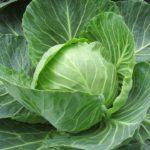 white-cabbage-2705228_960_720