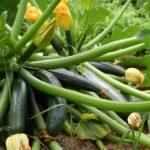 zucchini-4344270_960_720
