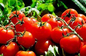 tomatoesz